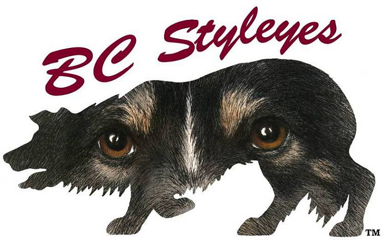 BC Styleyes: Border Collie art and products